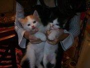Отдадим котят в добрые руки СРОЧНО!