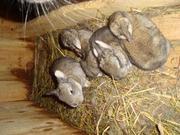 Продаю кроликов разных пород
