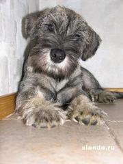 Отдам в добрые руки щенка 6 месяцев!!